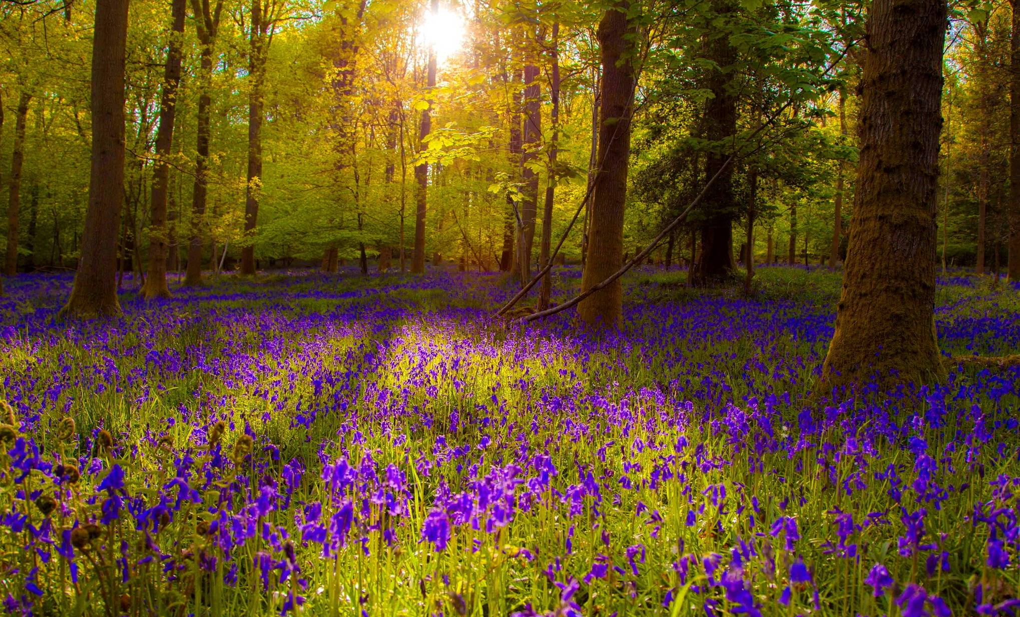 forest flowers wallpapers - photo #3