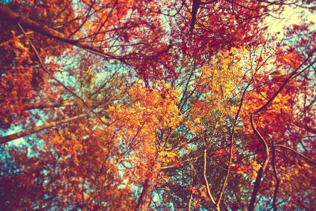 Autumn Leaves Desktop Wallpapers - Wallpaper Cave