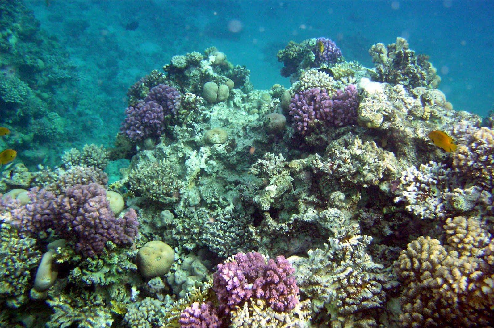 Wallpapers For > Colorful Coral Reef Wallpaper