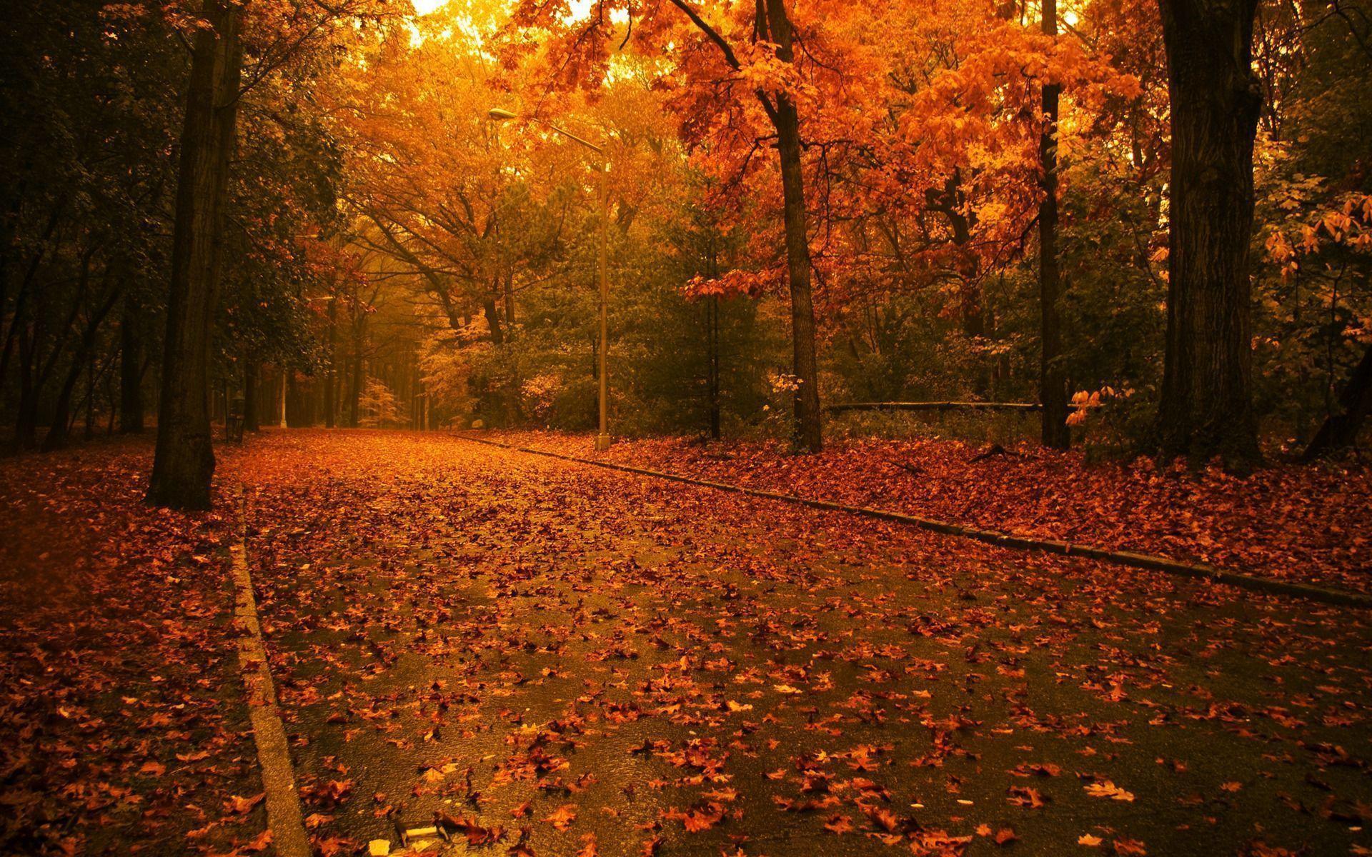 Fall Themed Wallpapers Desktop