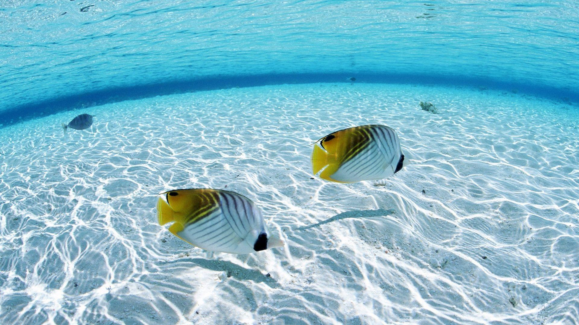 Hd Tropical Island Beach Paradise Wallpapers And Backgrounds: Tropical Fish Wallpapers