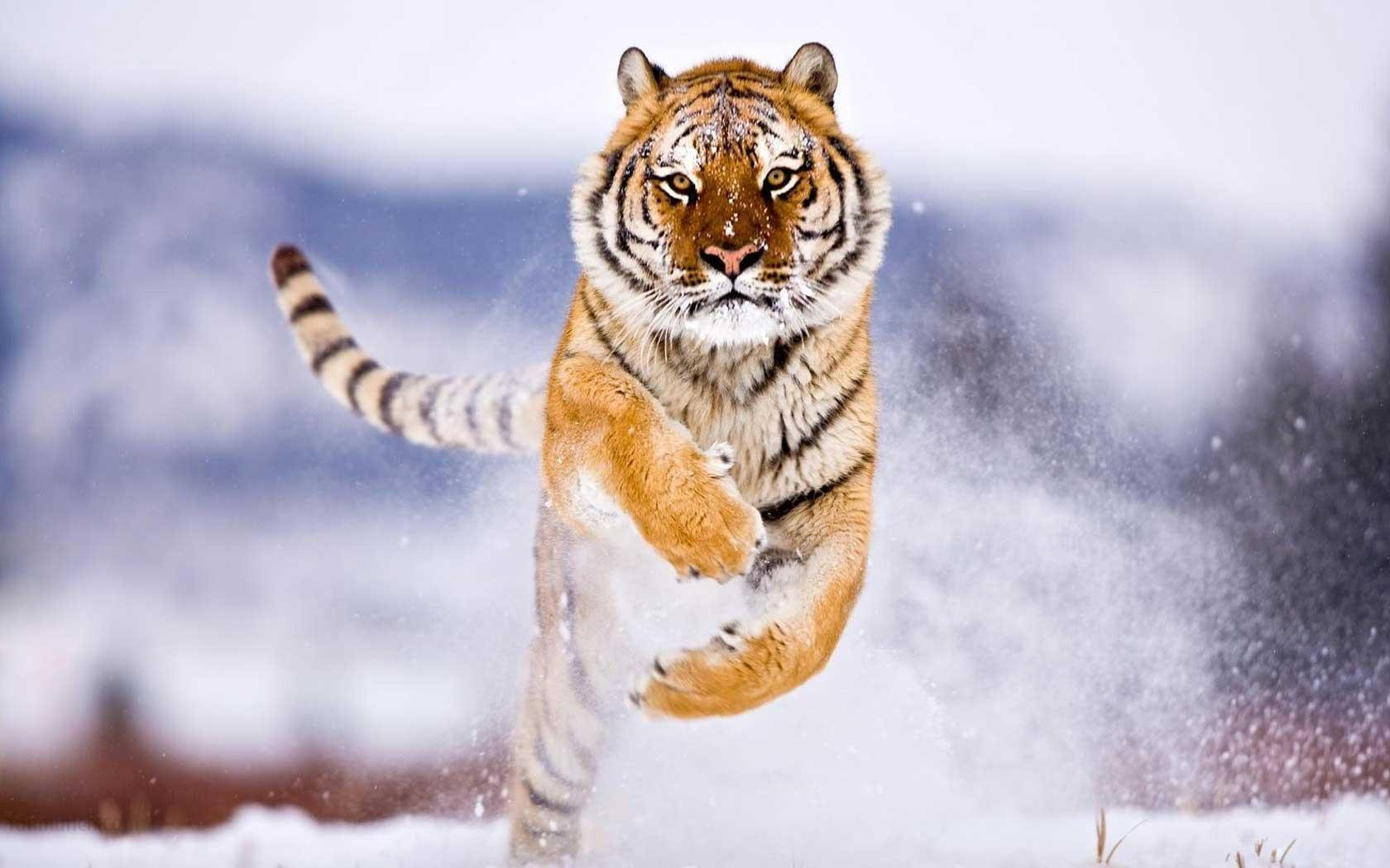 Wallpapers of wild animals