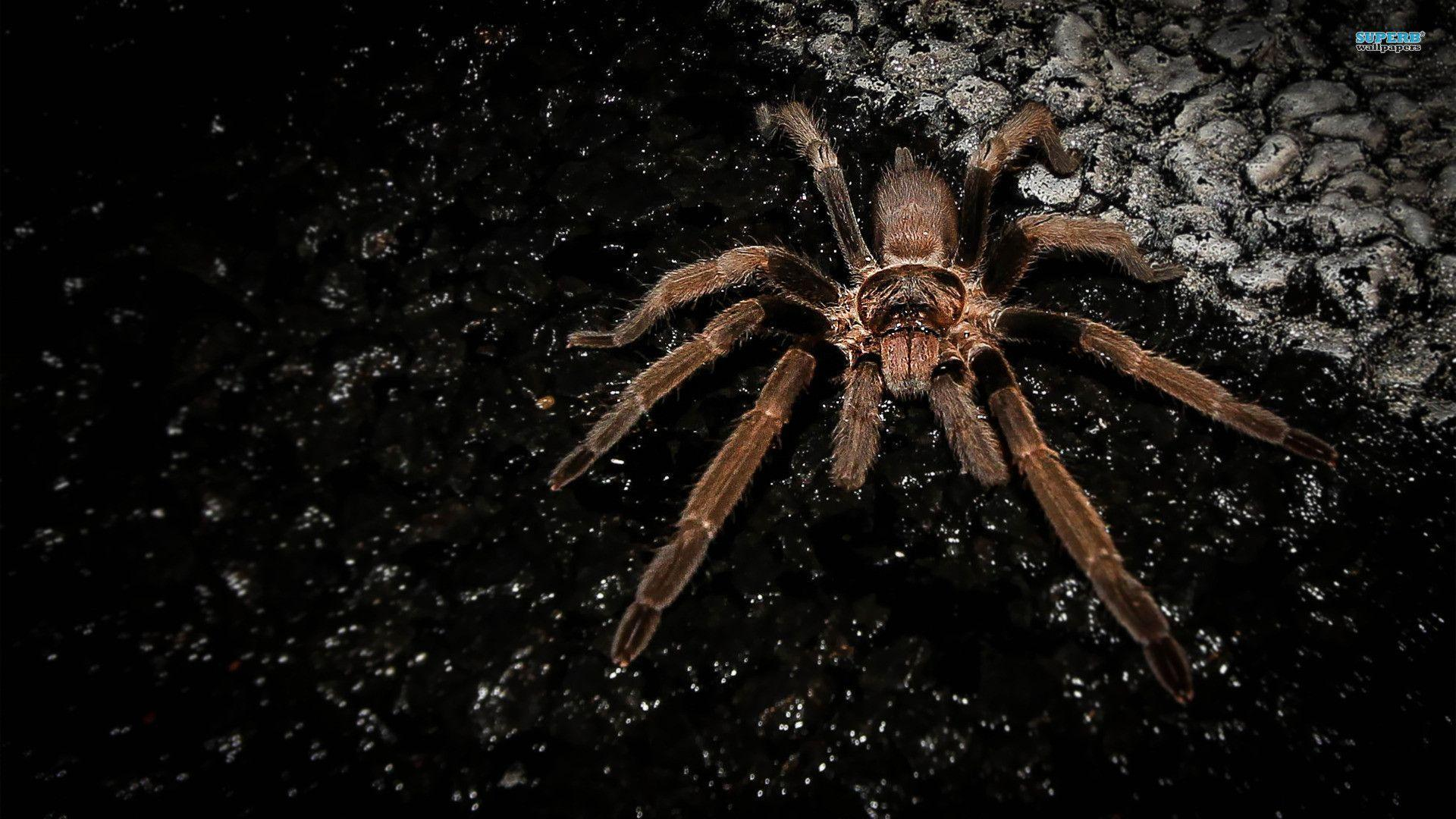 HD Collection Spider Wallpapers - HD Wallpapers Inn