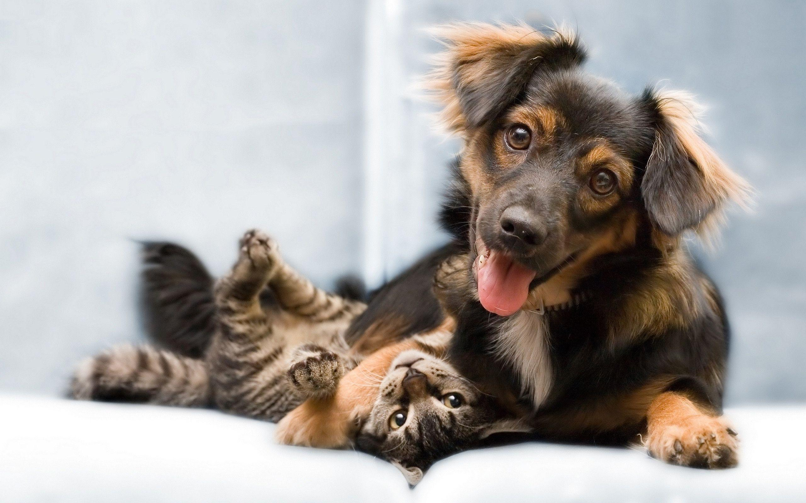 Dog Cat Friends Wallpapers