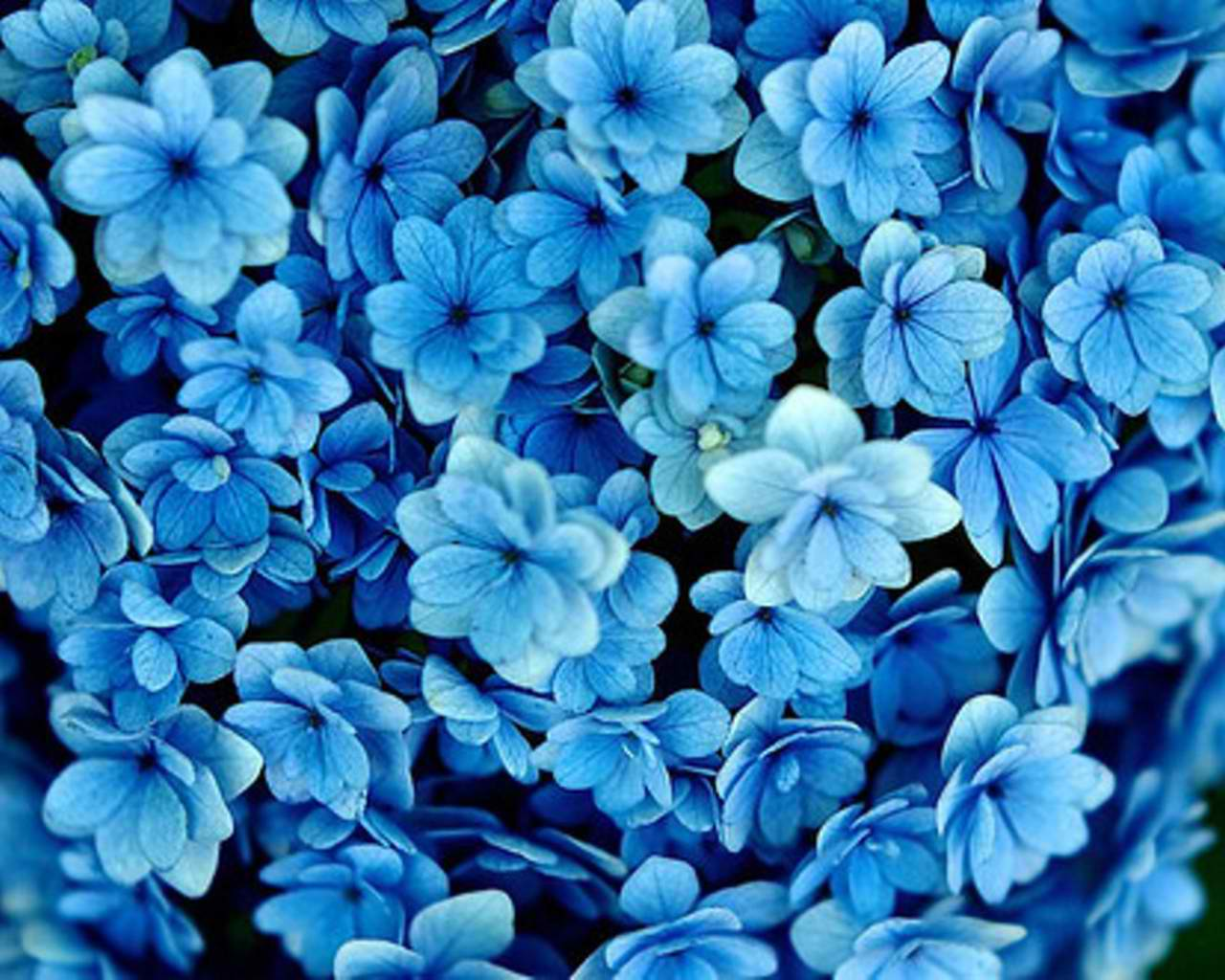 simple blue flower wallpapers - photo #4