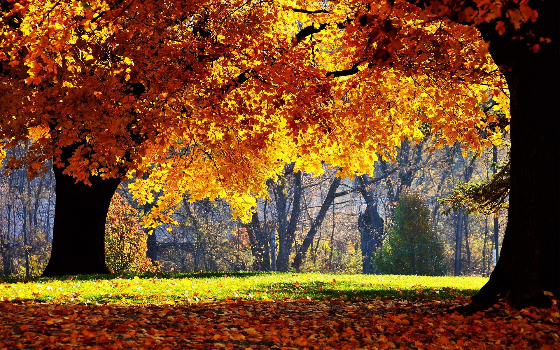 autumn photographs wallpapers miriadna