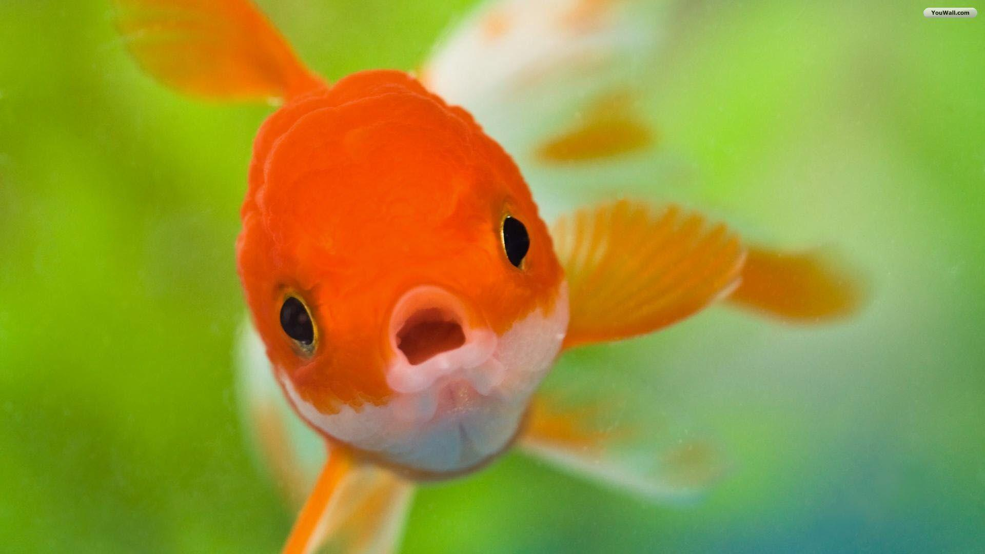 Water Fish Wallpapers Free