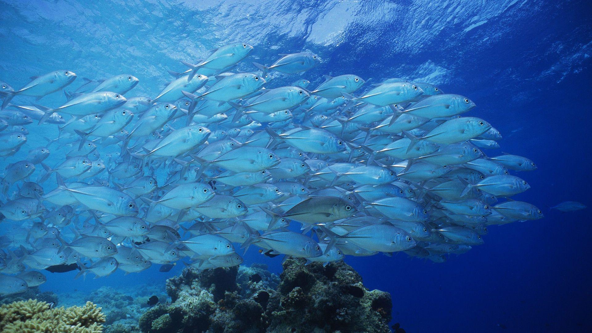 Картинки с морскими видами