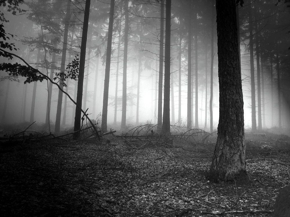 Pix For > Dark Forest Background