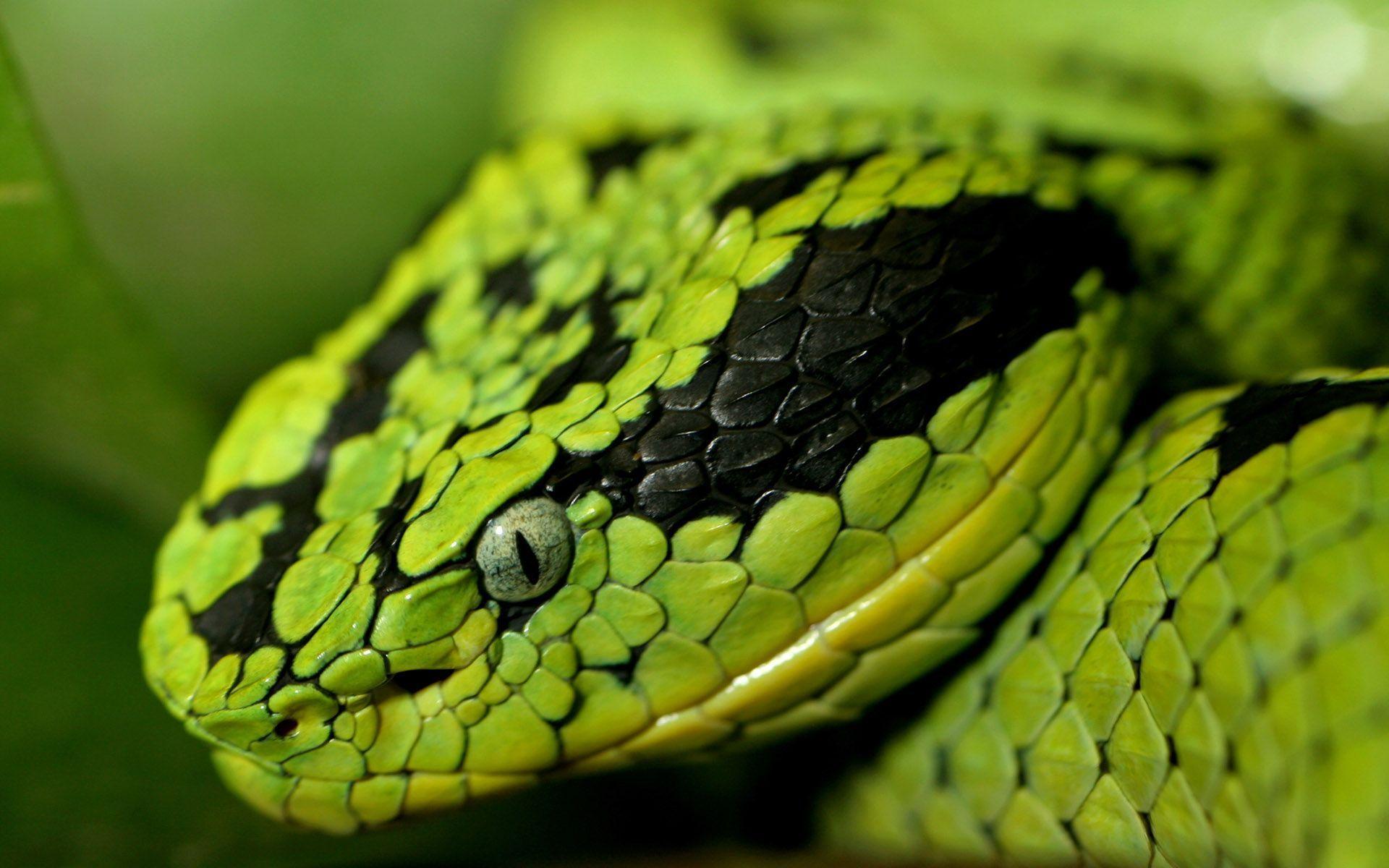 Snake wallpaper - 562657