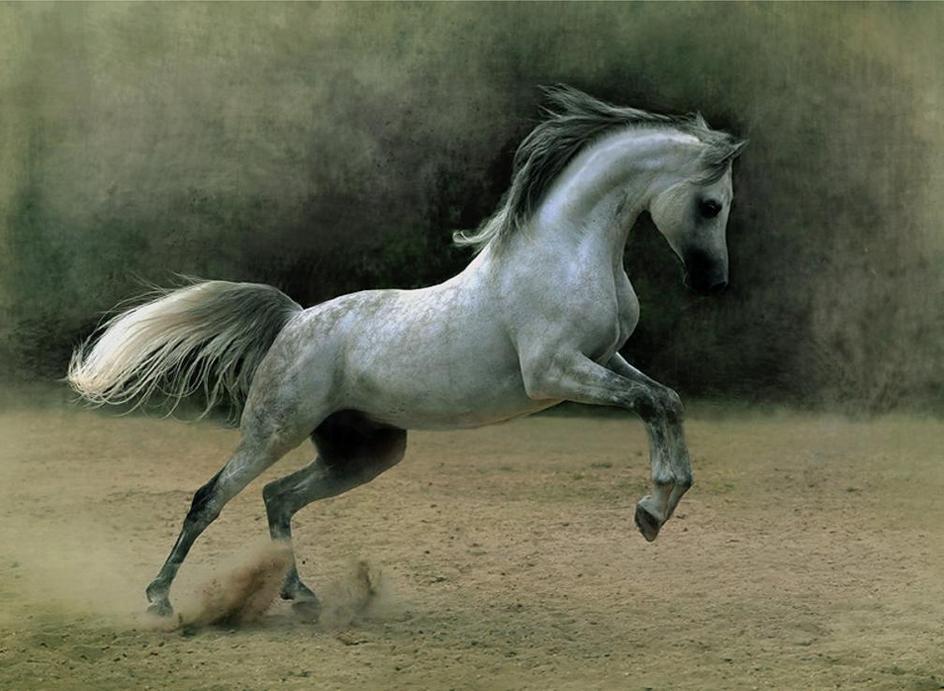 Arabian Horse Wallpapers Wallpaper Cave
