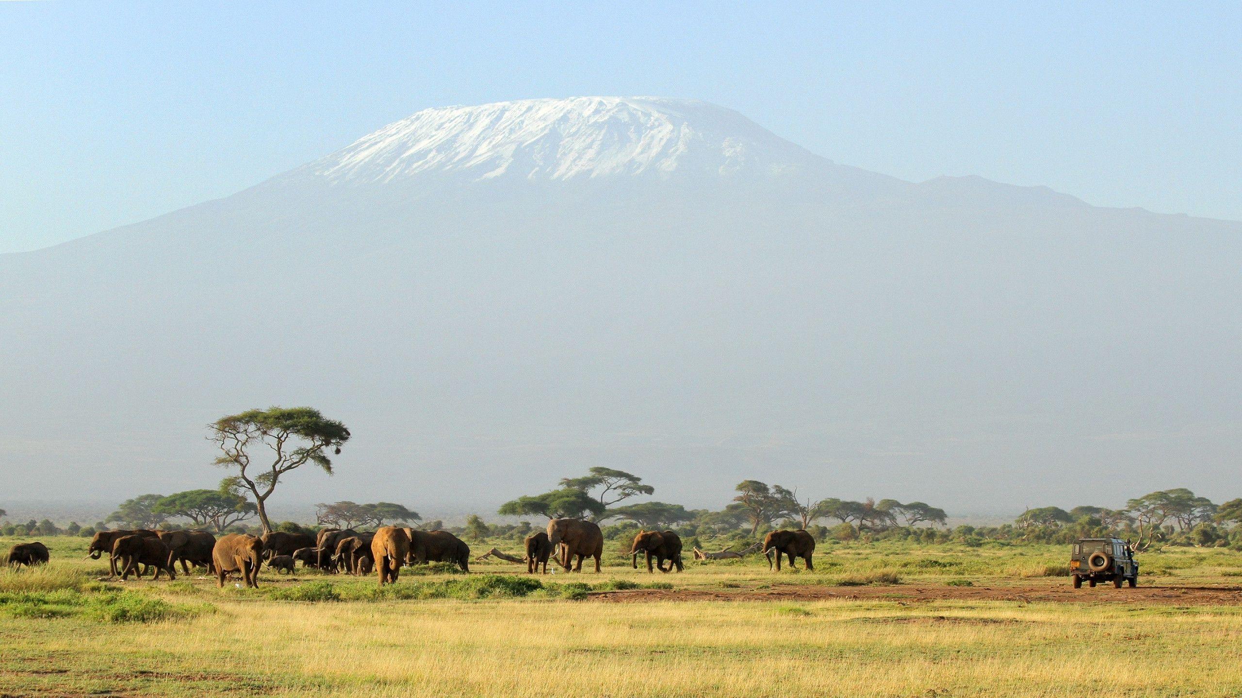 HD Kilimanjaro Safari Wallpaper | Download Free - 123474