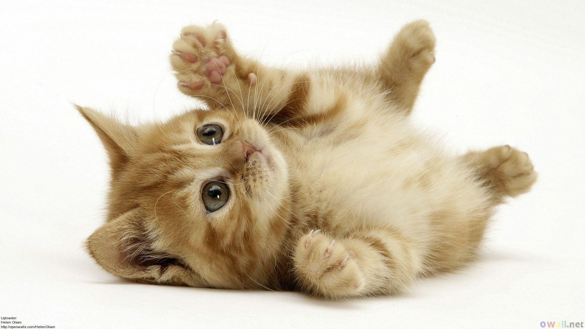 Wallpapers For > Funny Kitten Wallpaper