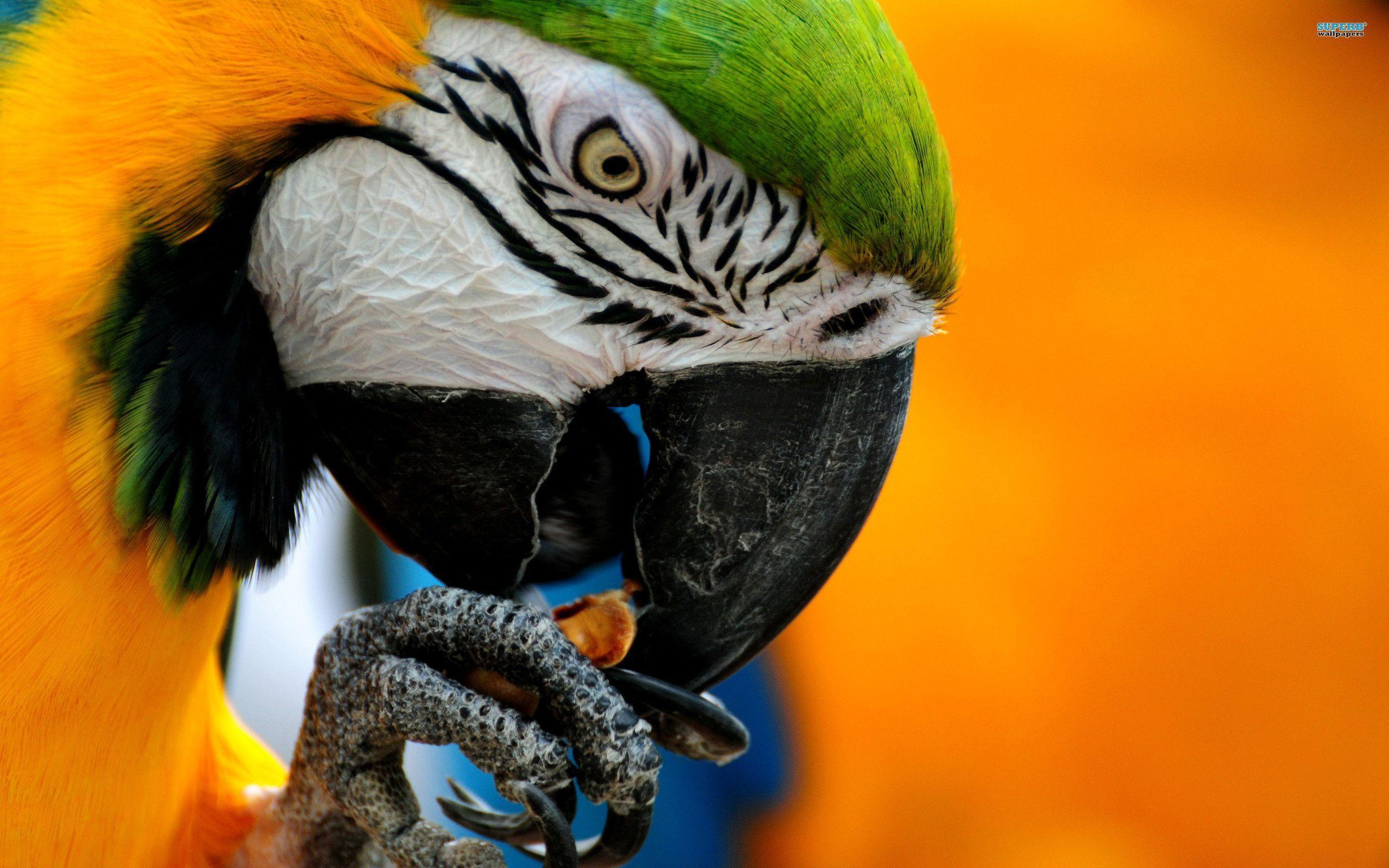 Animals For > Blue Macaw Parrot Wallpaper