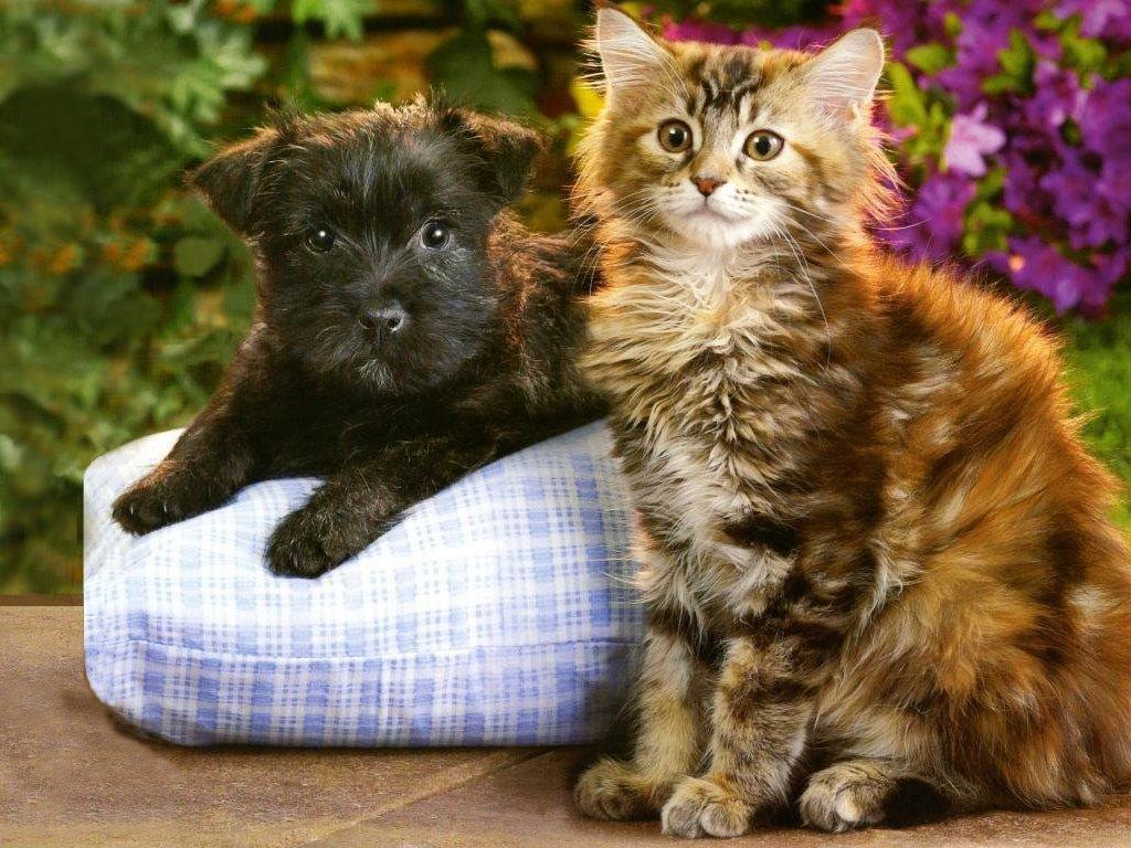 Kitten And Puppy Wallpaper Hd