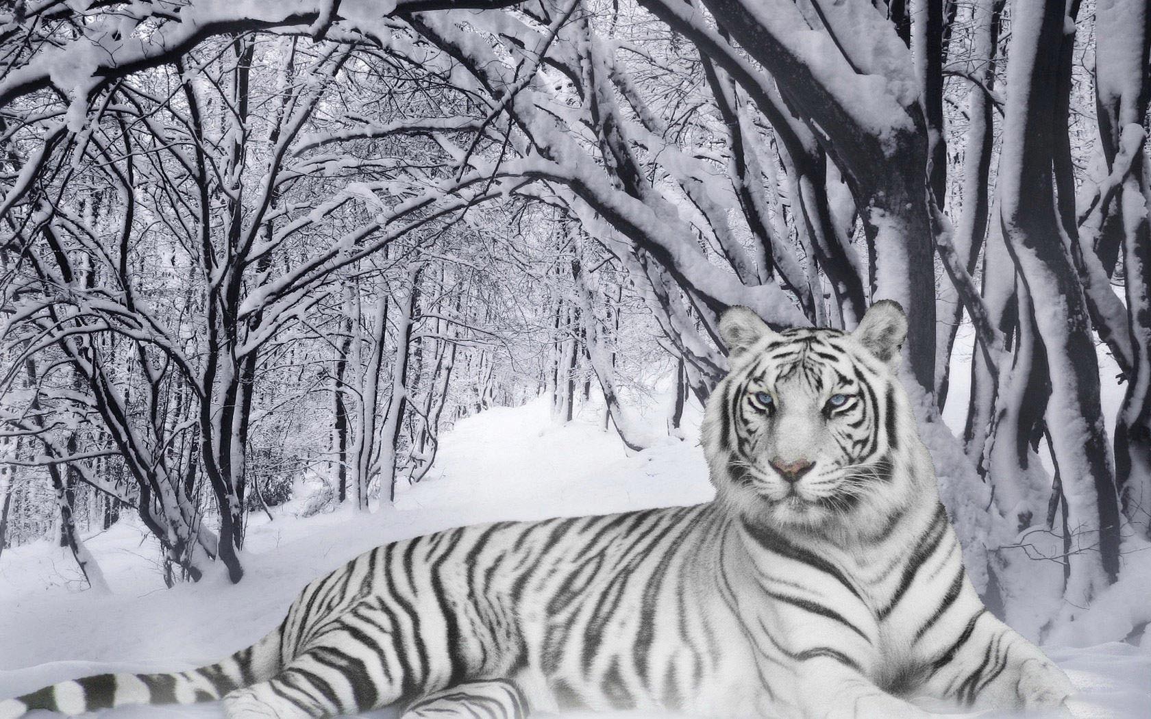 Snow Desktop Backgrounds
