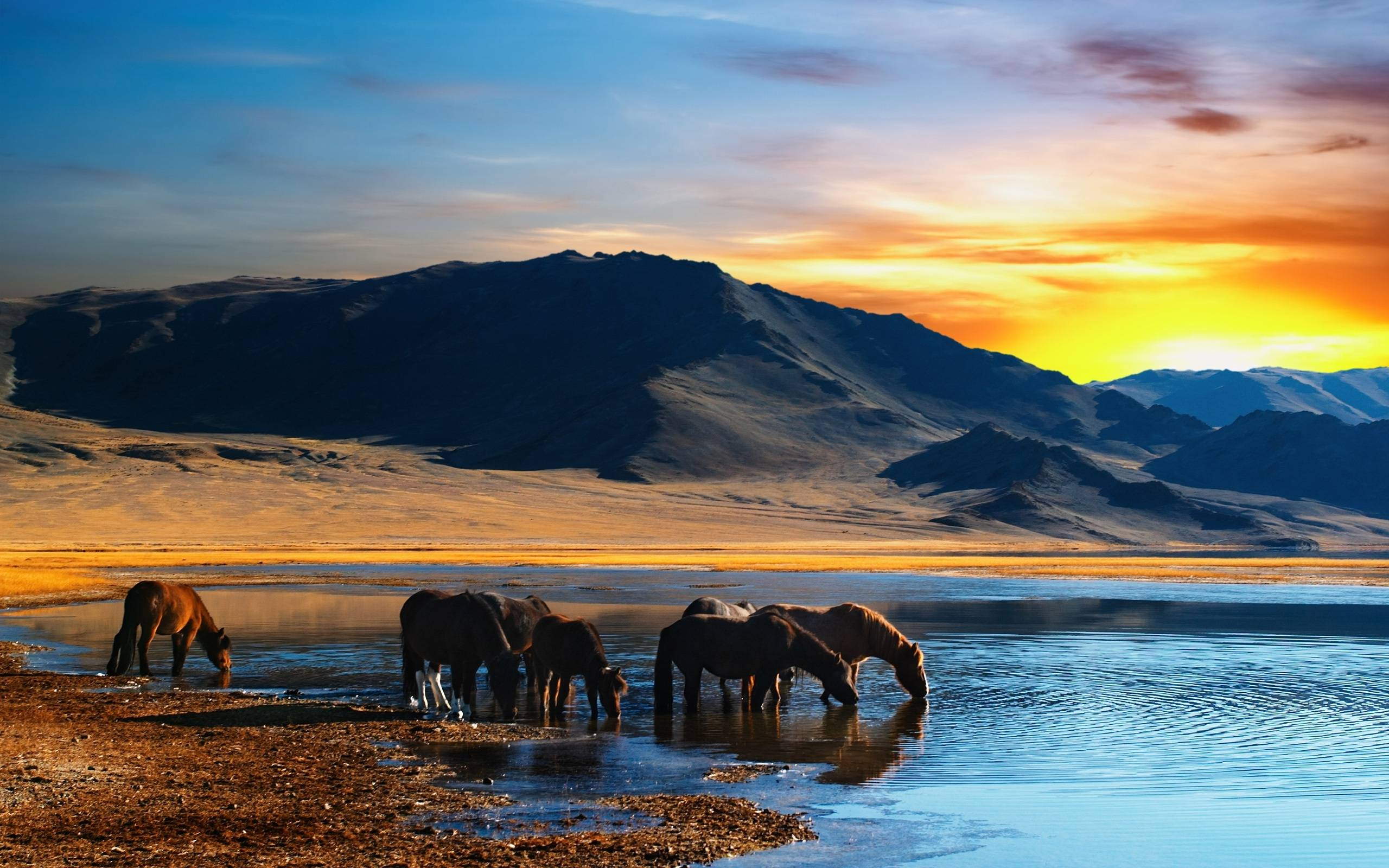 island mountain horse wallpaper - photo #10