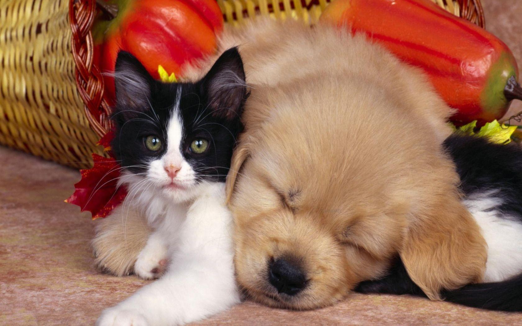 Wallpapers For > Cute Puppy And Kitten Wallpapers