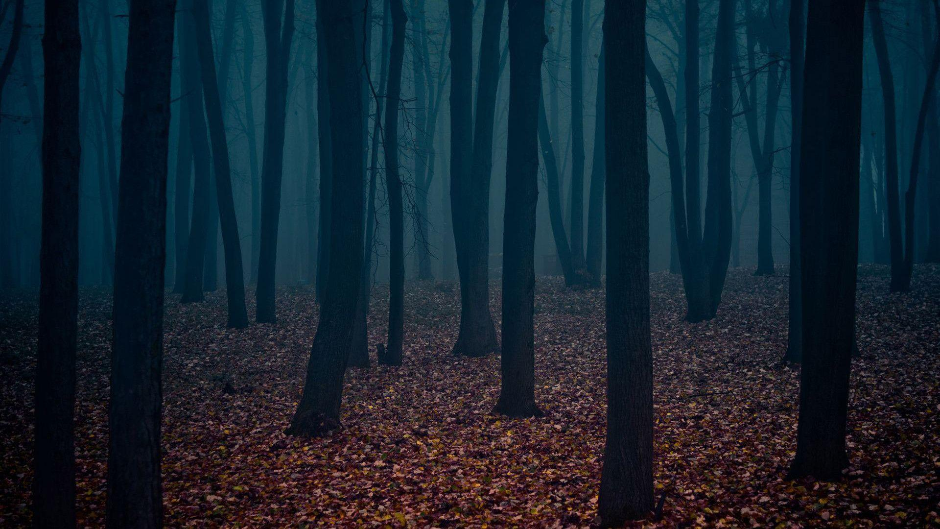 dark places forest trees - photo #24