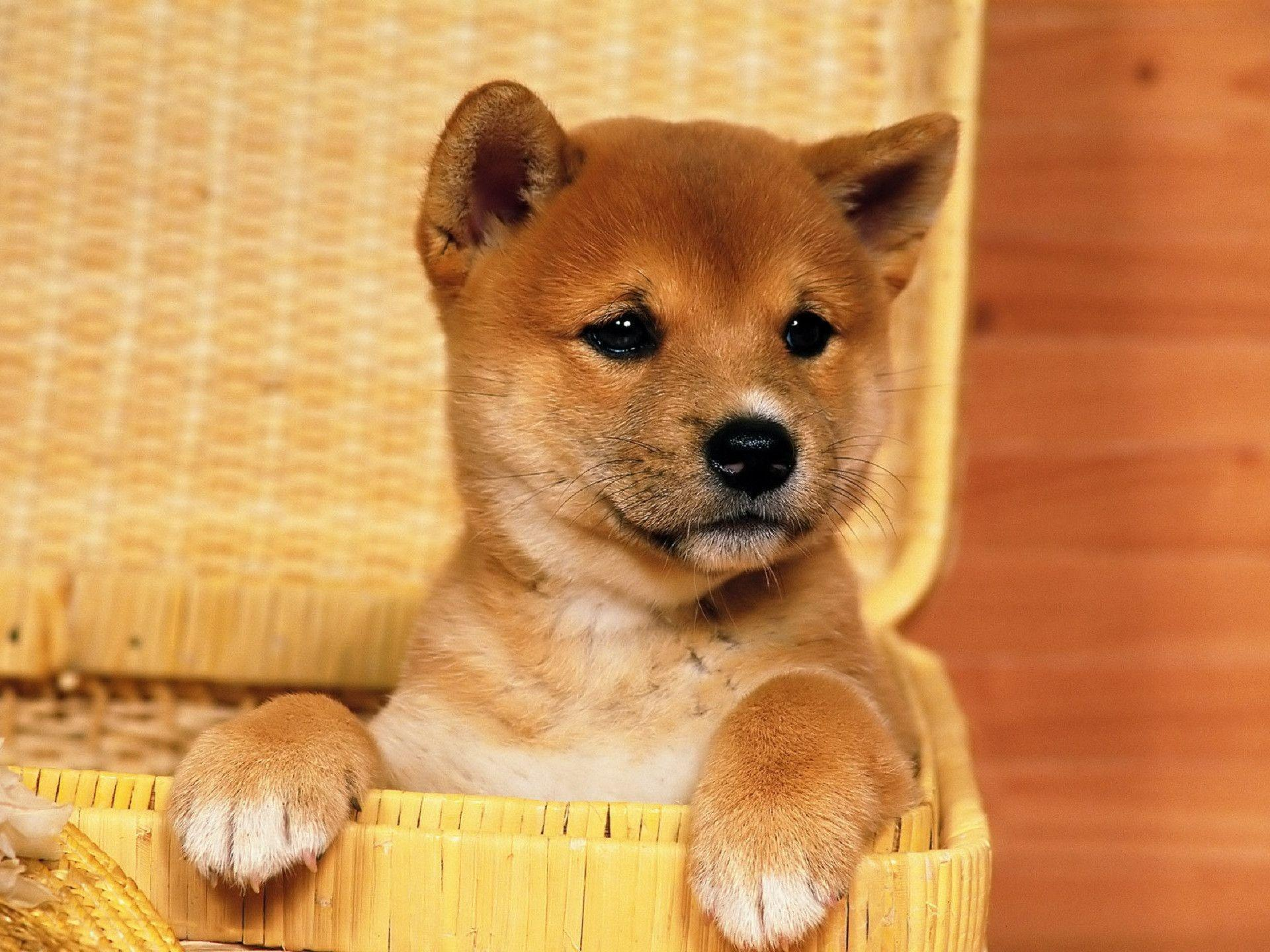 baby and shiba inu wallpaper -#main