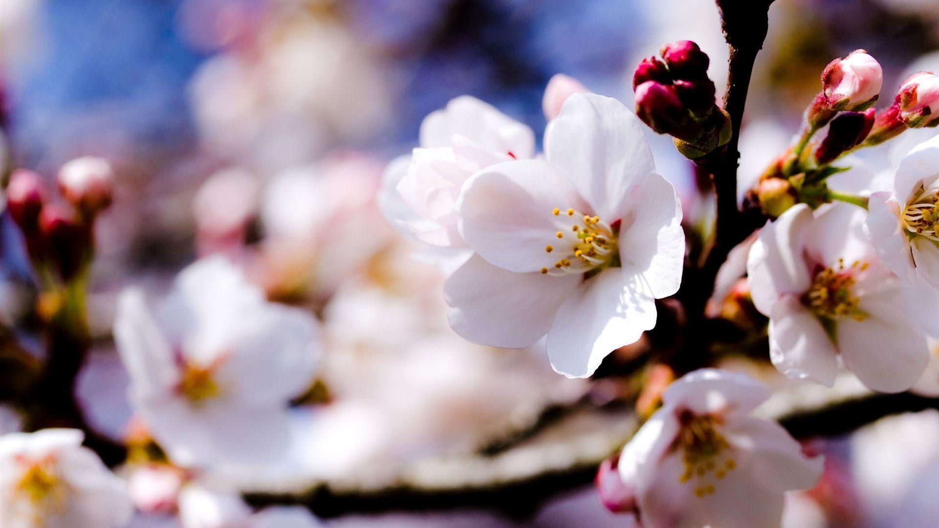 flowers spring wallpaper 1920x1080 - photo #1