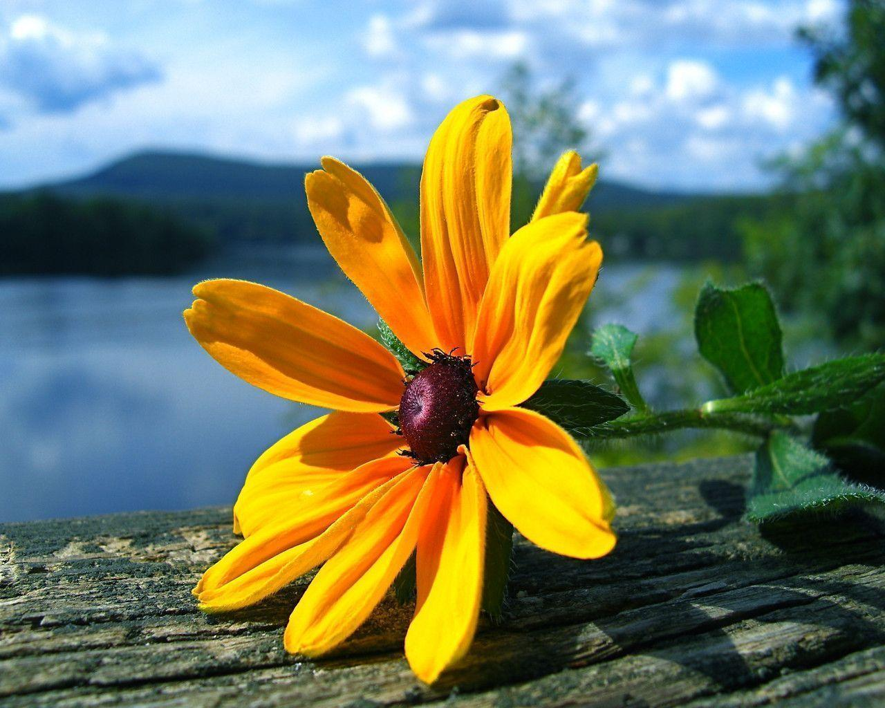 Yellow Flower Wallpapers Wallpaper Cave
