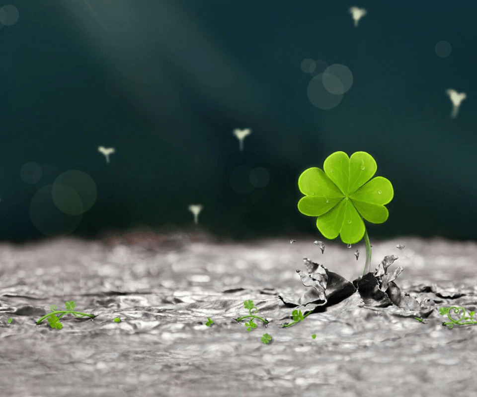 Lucky Four Leaf Clover Wallpaper Backgrounds
