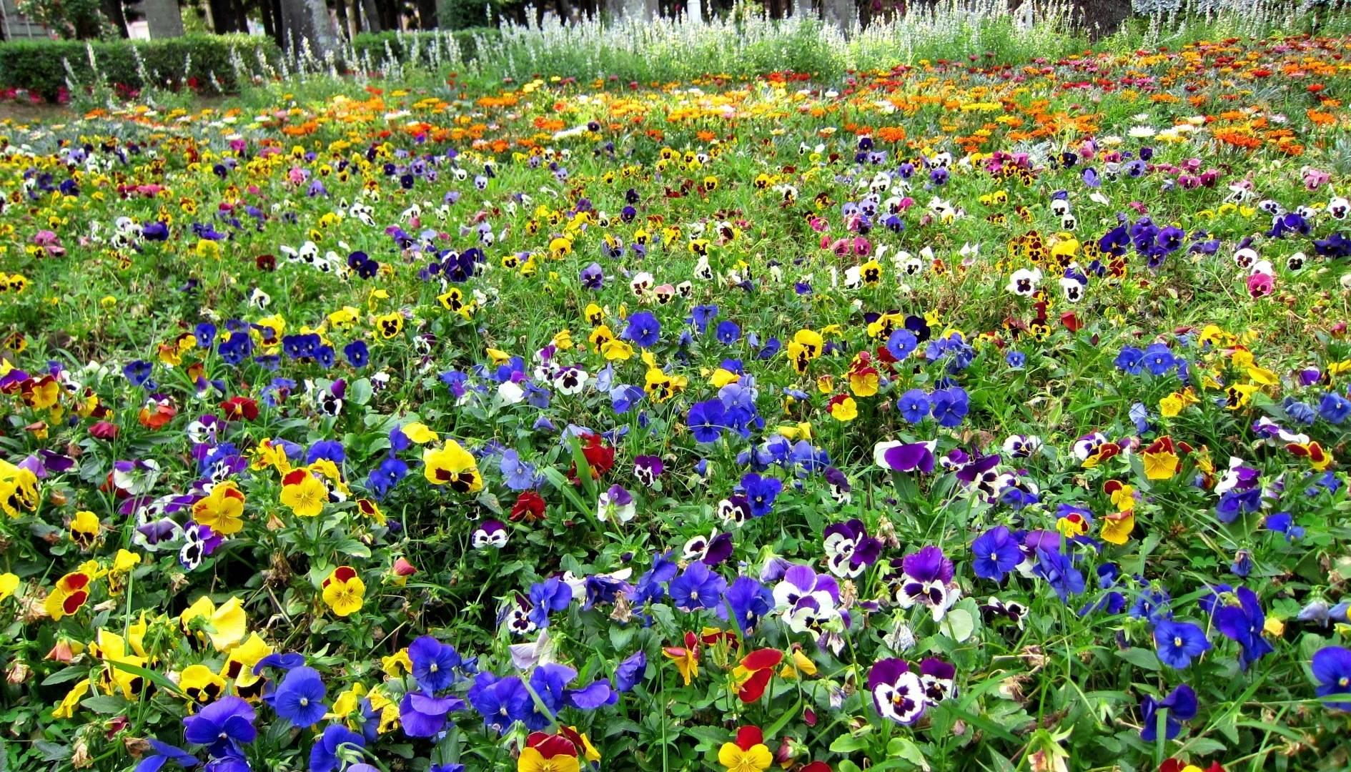 Wallpaper download garden - Hd Beautiful Garden Wallpaper Download Free 67095