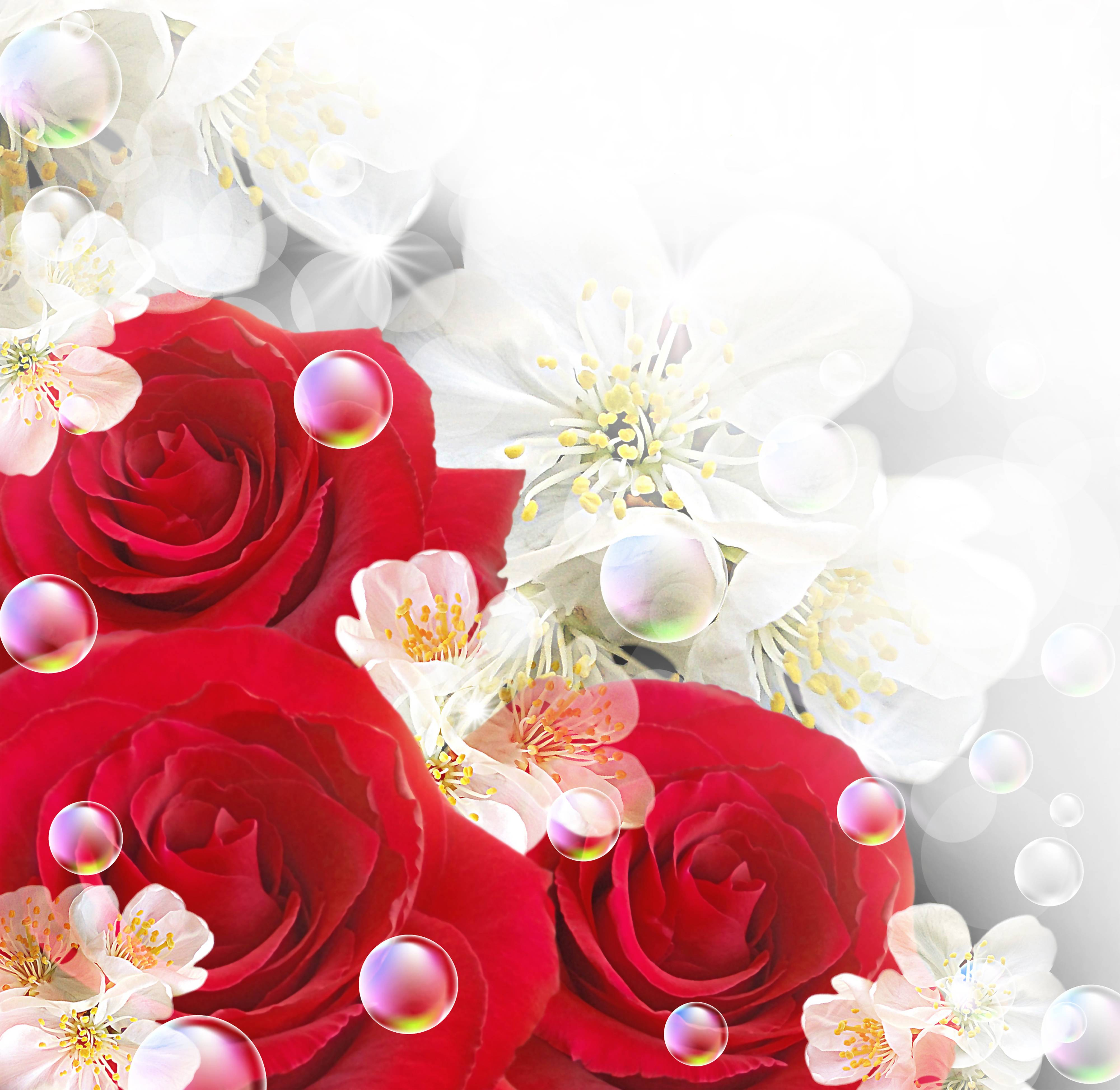 Red Roses With White Backgrounds