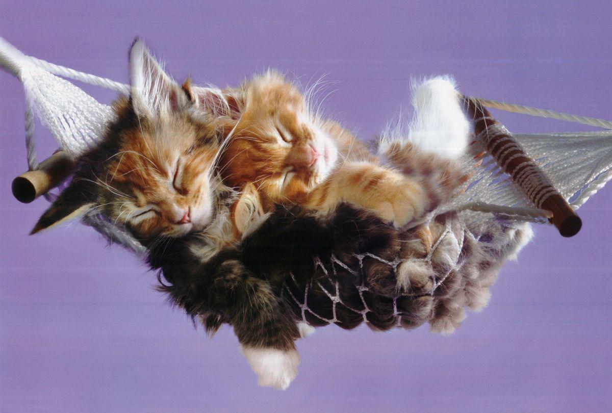 Memes For > Cute Funny Kittens