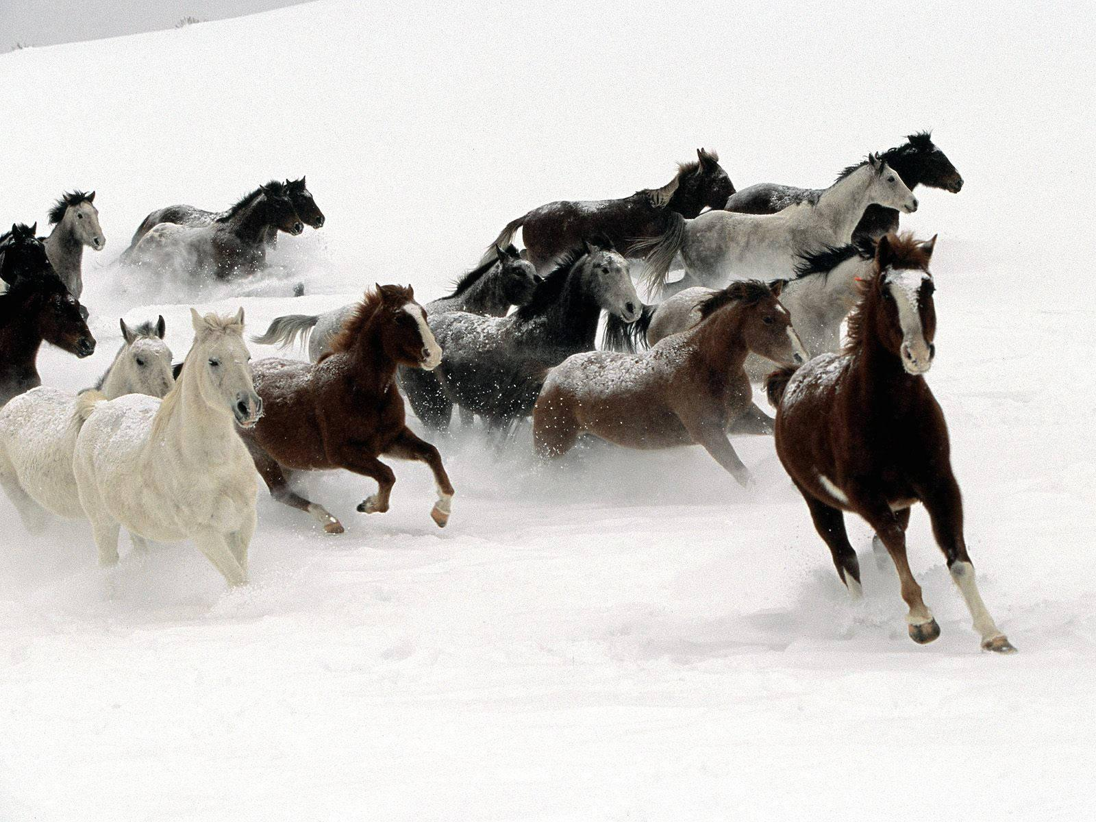 Horse Wallpapers in HD - Barbaras HD Wallpapers