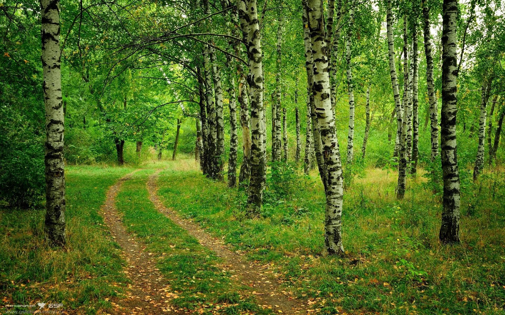 download wallpaper birch trees road free desktop wallpaper in