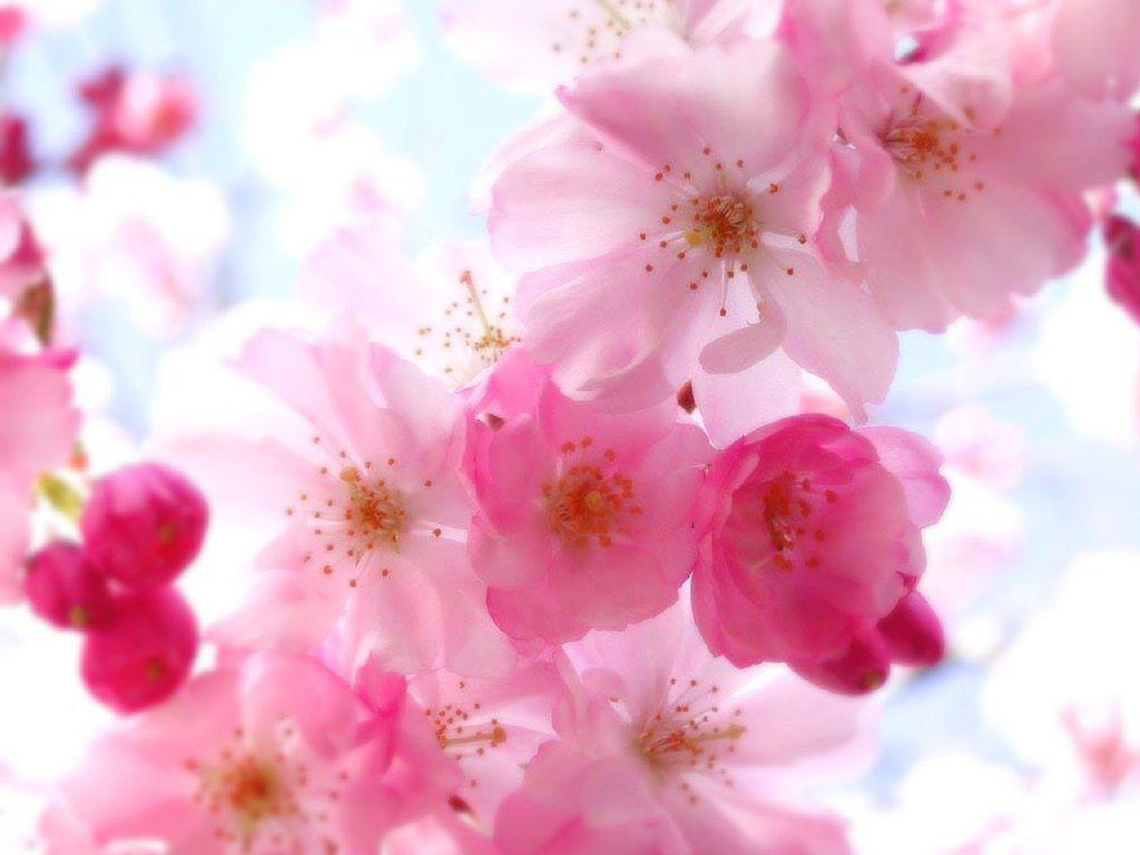 Pretty Flower Backgrounds - Wallpaper Cave