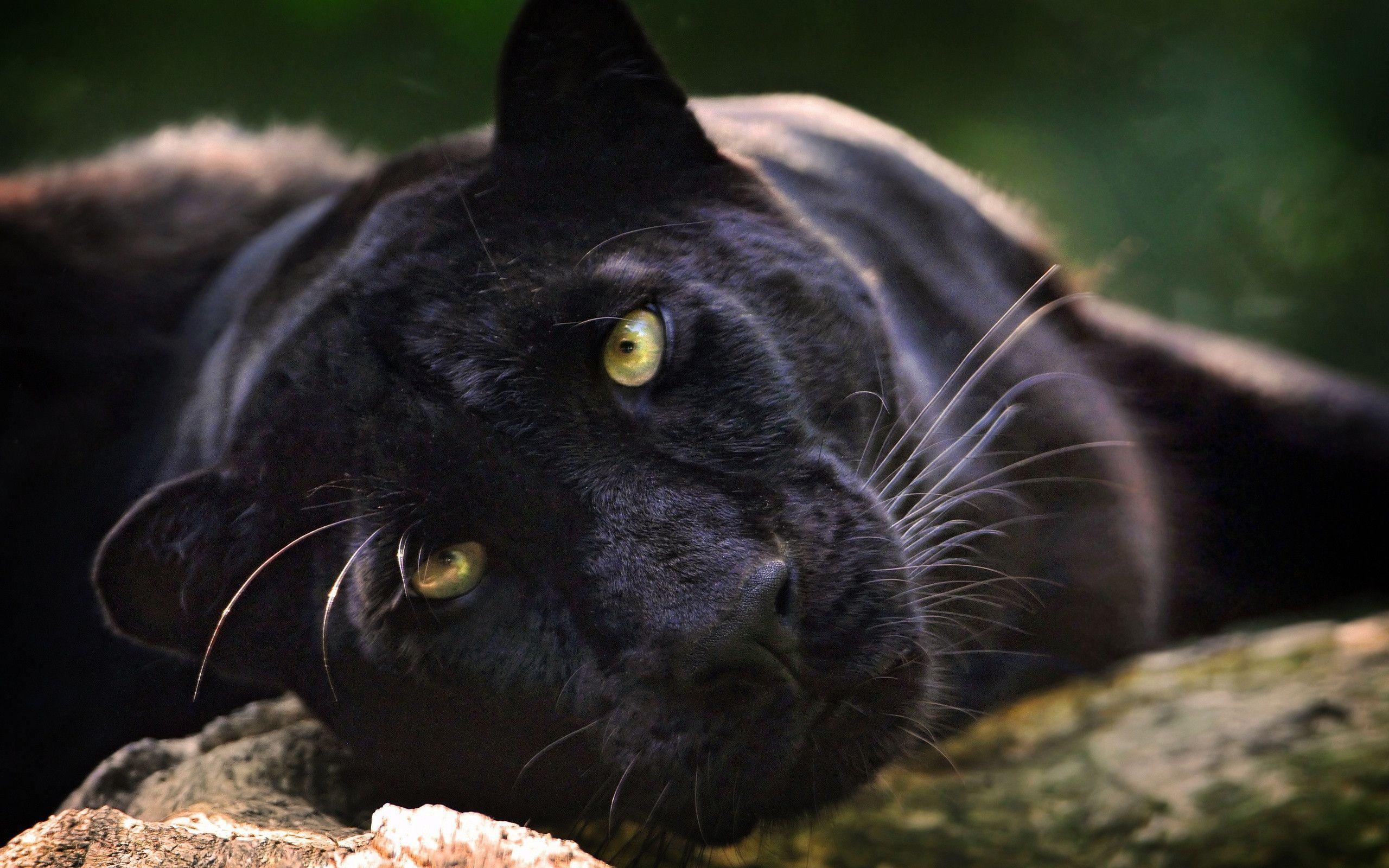 black leopard backgrounds - photo #21