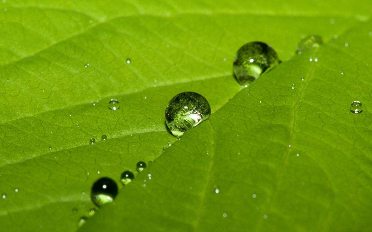 Cute water drops on a leaf Wallpapers