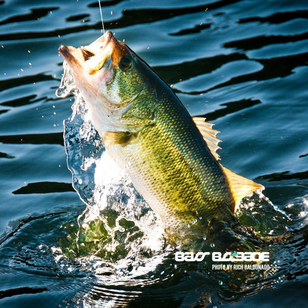 bass fishing pc wallpaper - photo #40