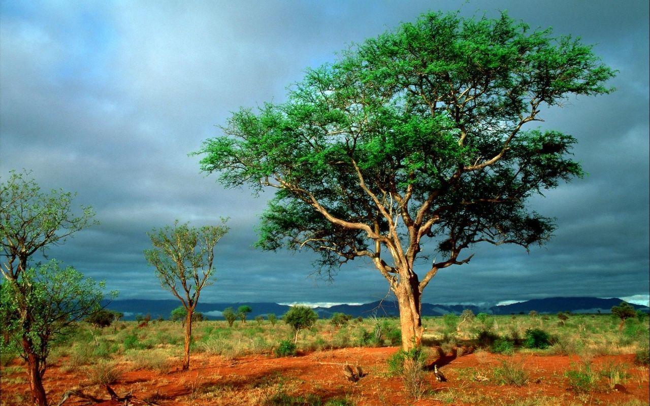 Africa HD Wallpapers - Wide wallpapers - Widewallpapers.