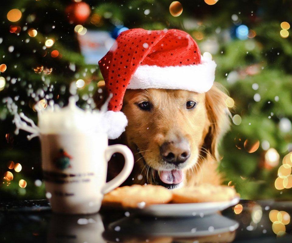 Christmas Dog Wallpaper image