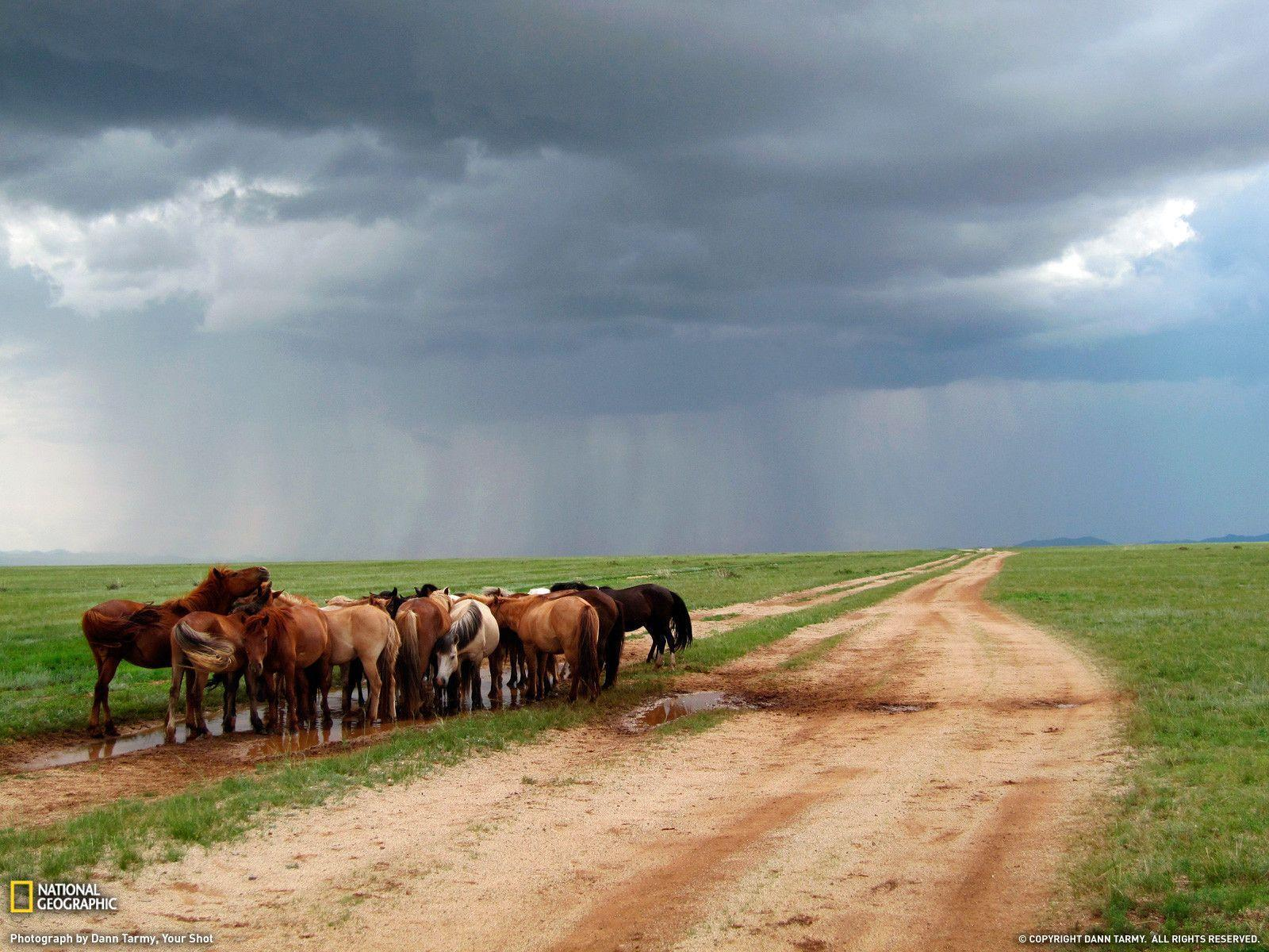 Ponies Photo, Animal Wallpapers – National Geographic Photo of the Day