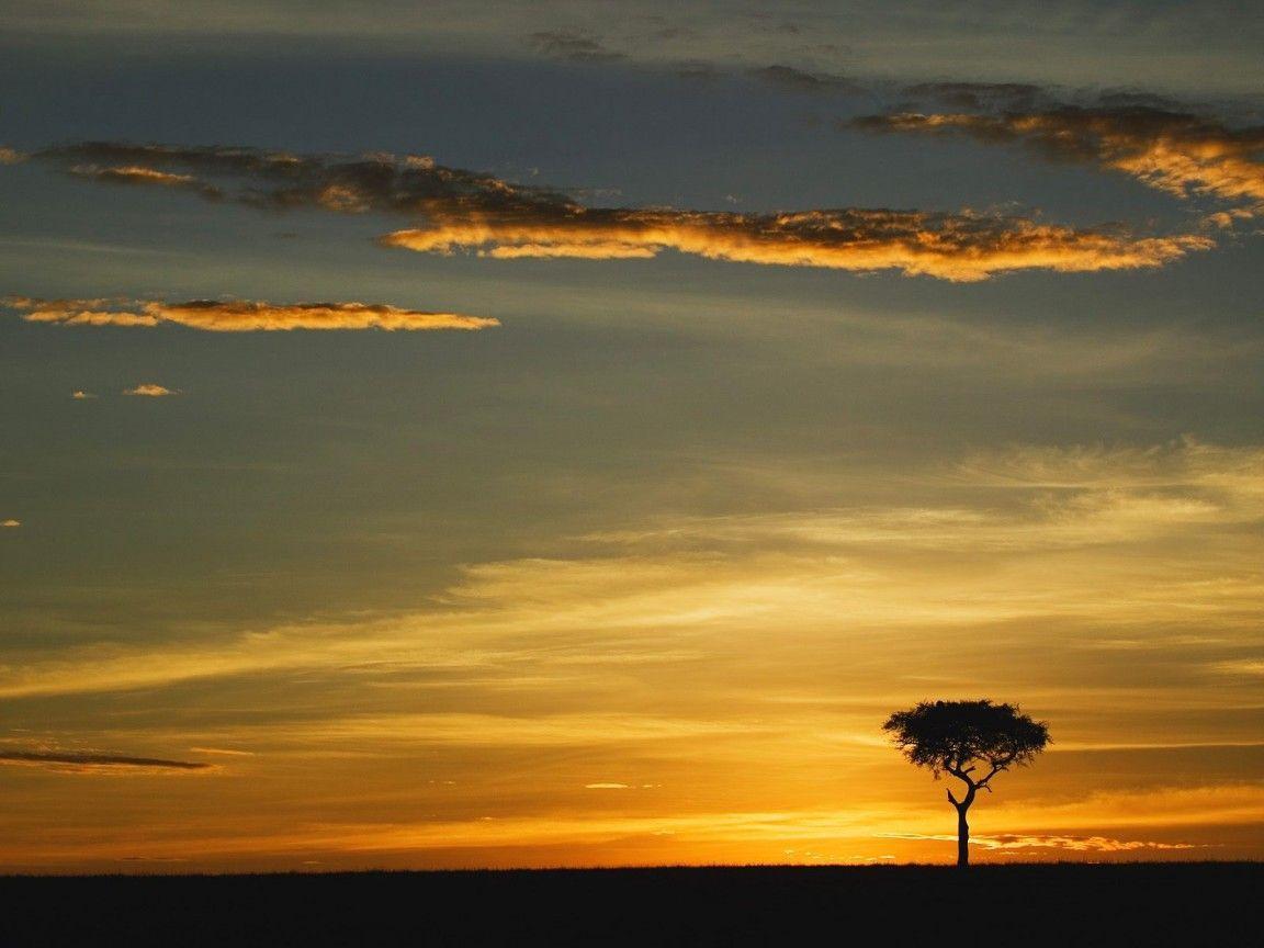 world_africa_single_acacia_ ...