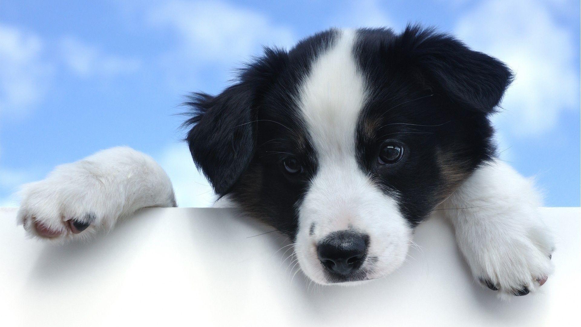 Black And White Dog Wallpaper Photo Sdeerwallpaper