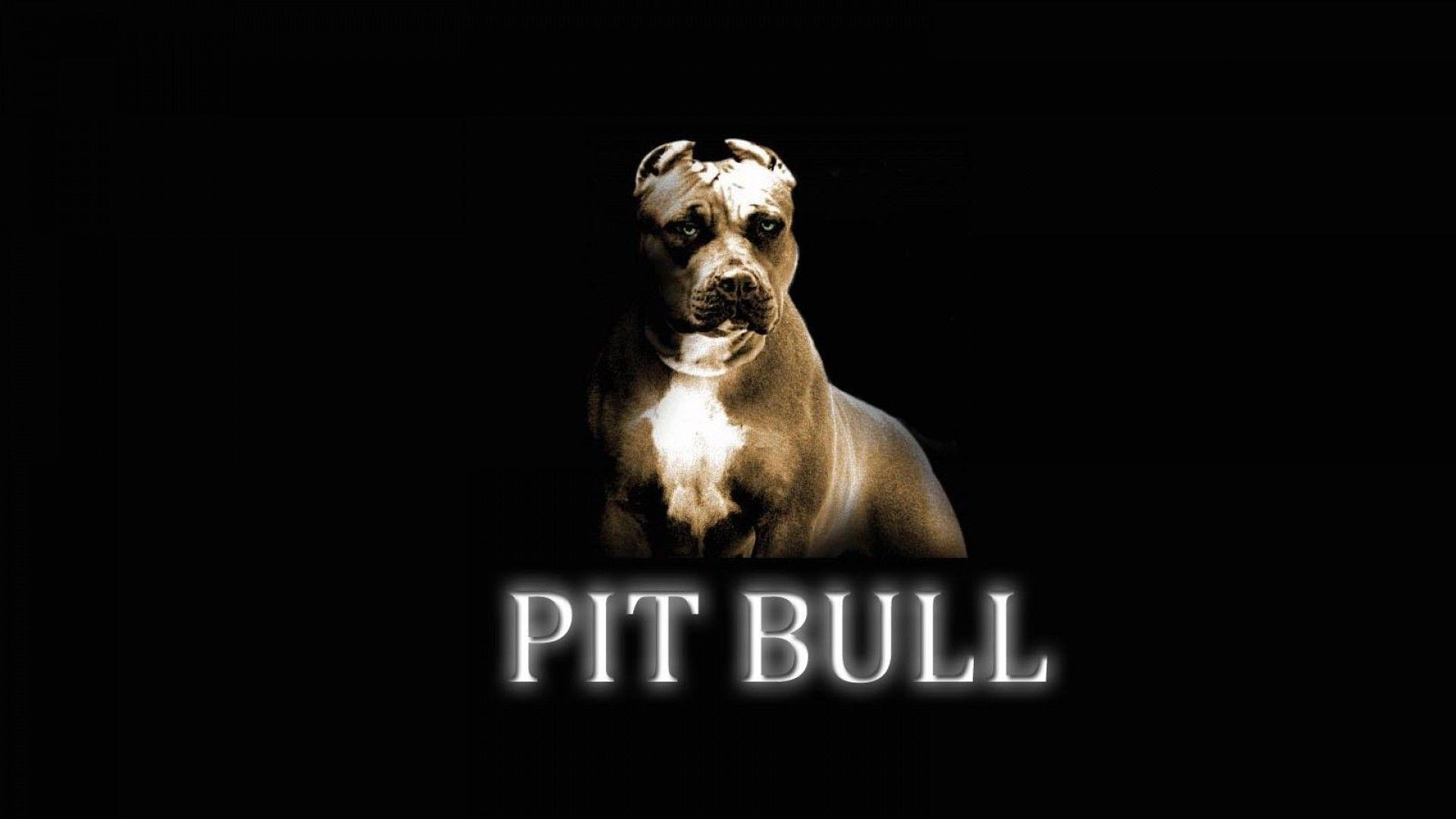 Pitbull Dog Wallpapers Wallpaper Cave