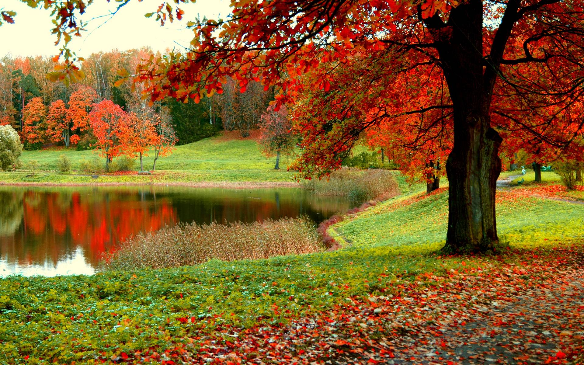 Fall Leaves Photography Wallpaper Fall Forest Wallpapers...