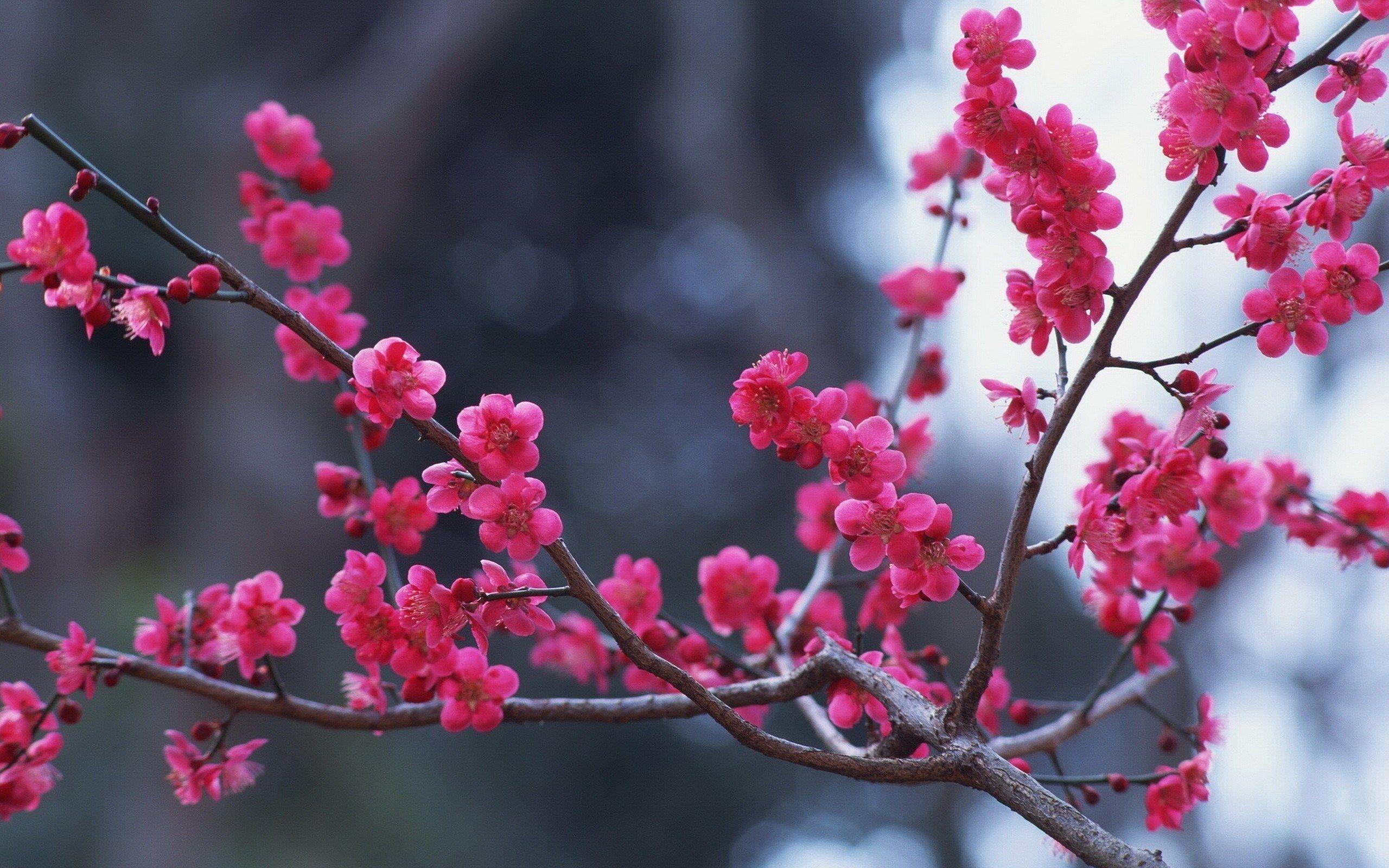 Spring Nature Wallpapers with Pink Flower Branches