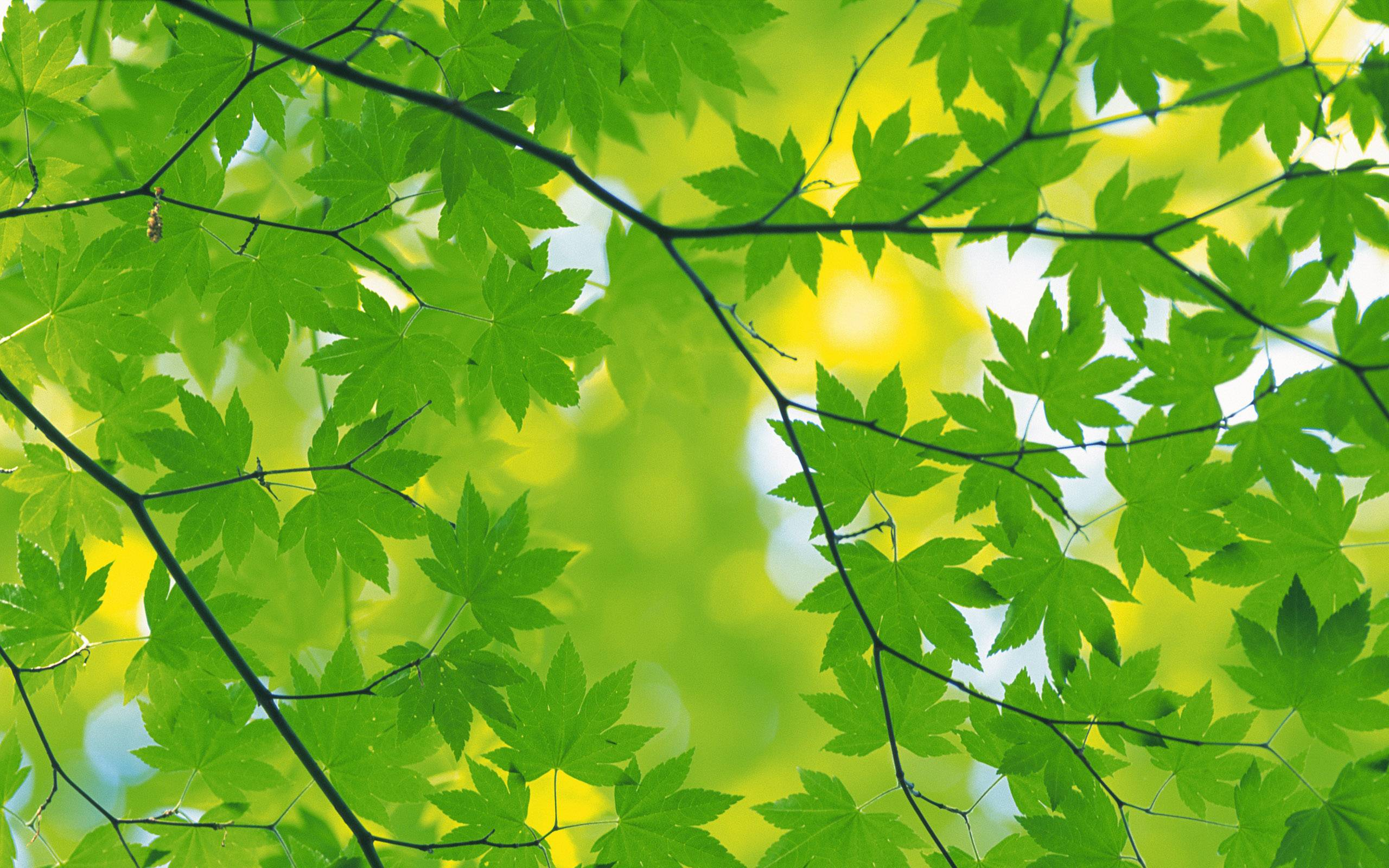 light green leaves background - photo #27