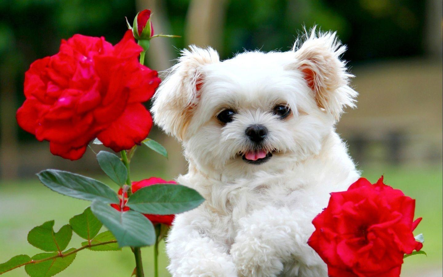 Puppies Wallpapers | Inspire Kids