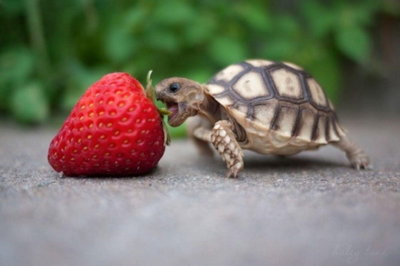 Cute Baby Turtle Wallpaper