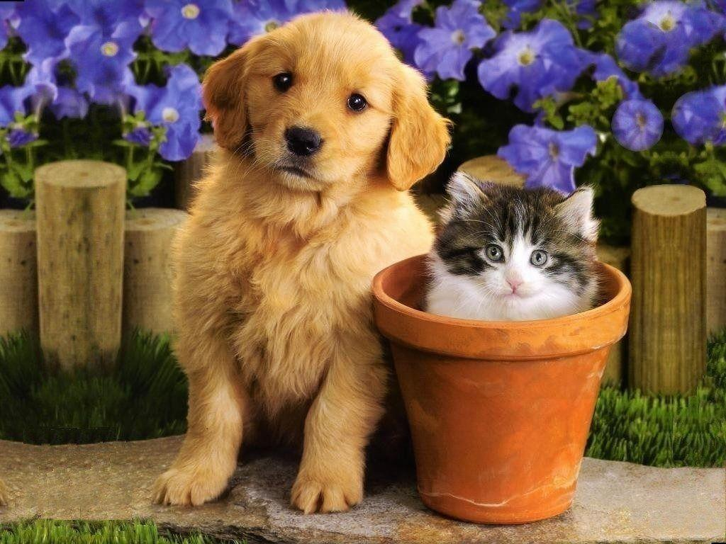 Puppies And Kittens Wallpapers and Backgrounds