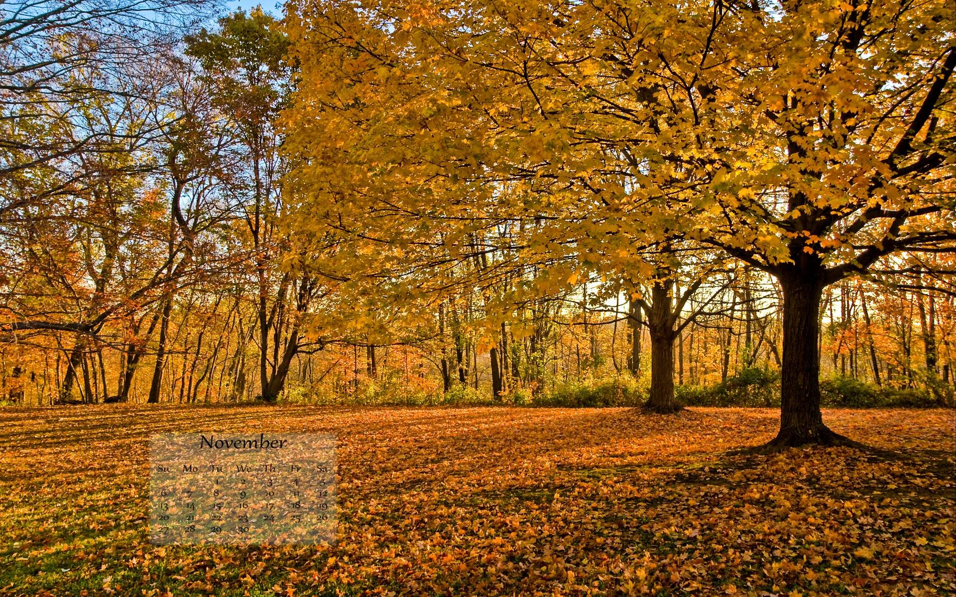 Get your FREE November Fall Desktop Wallpaper