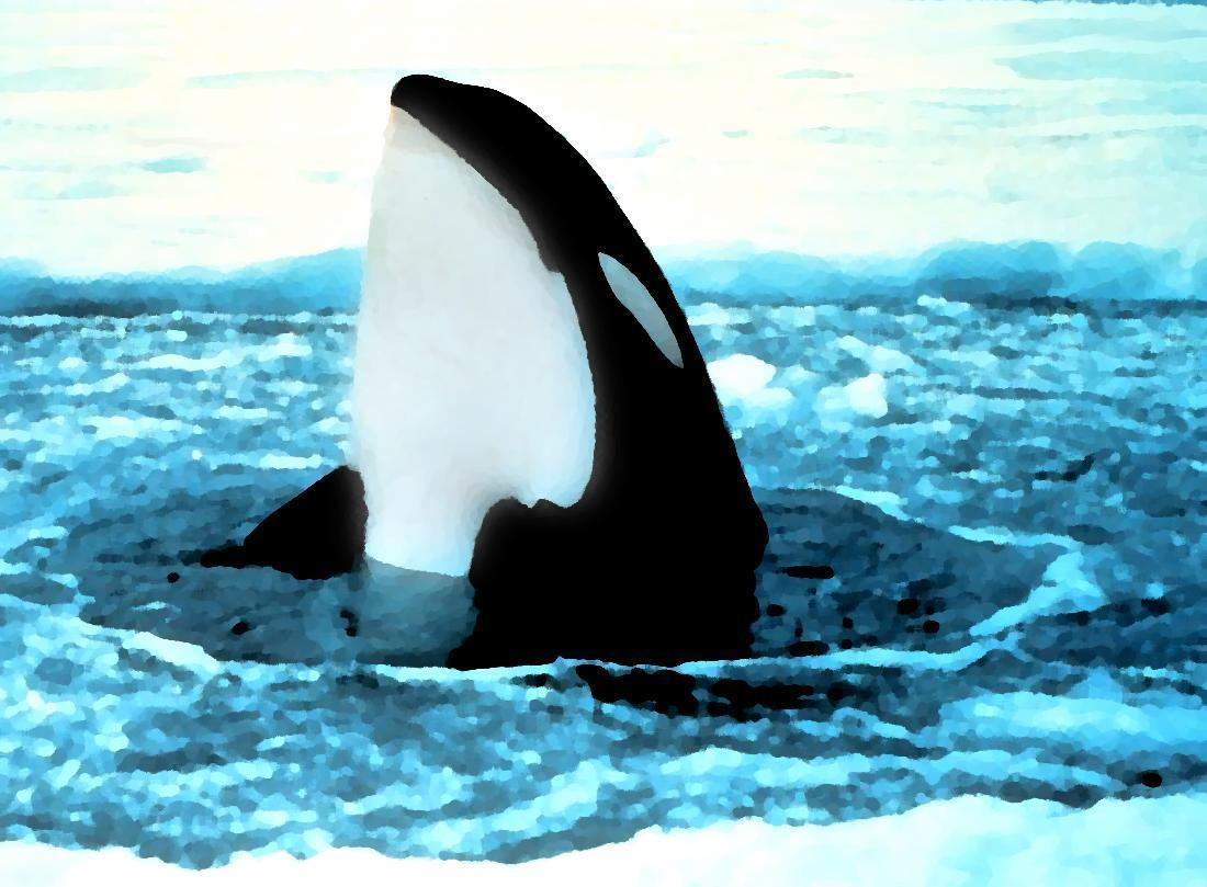 orca popping out of ice painting wallpaper - Animal Backgrounds